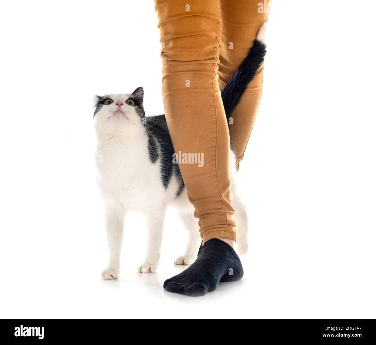 gato feral frente de fondo blanco Foto de stock