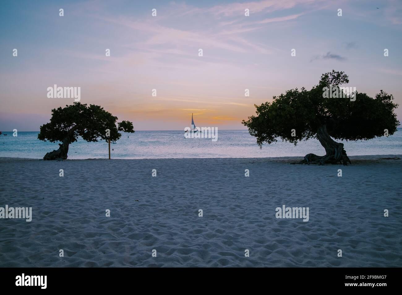 Puesta de sol en Eagle Beach Aruba, Divi Dive árboles en la costa de Eagle Beach en Aruba. Foto de stock