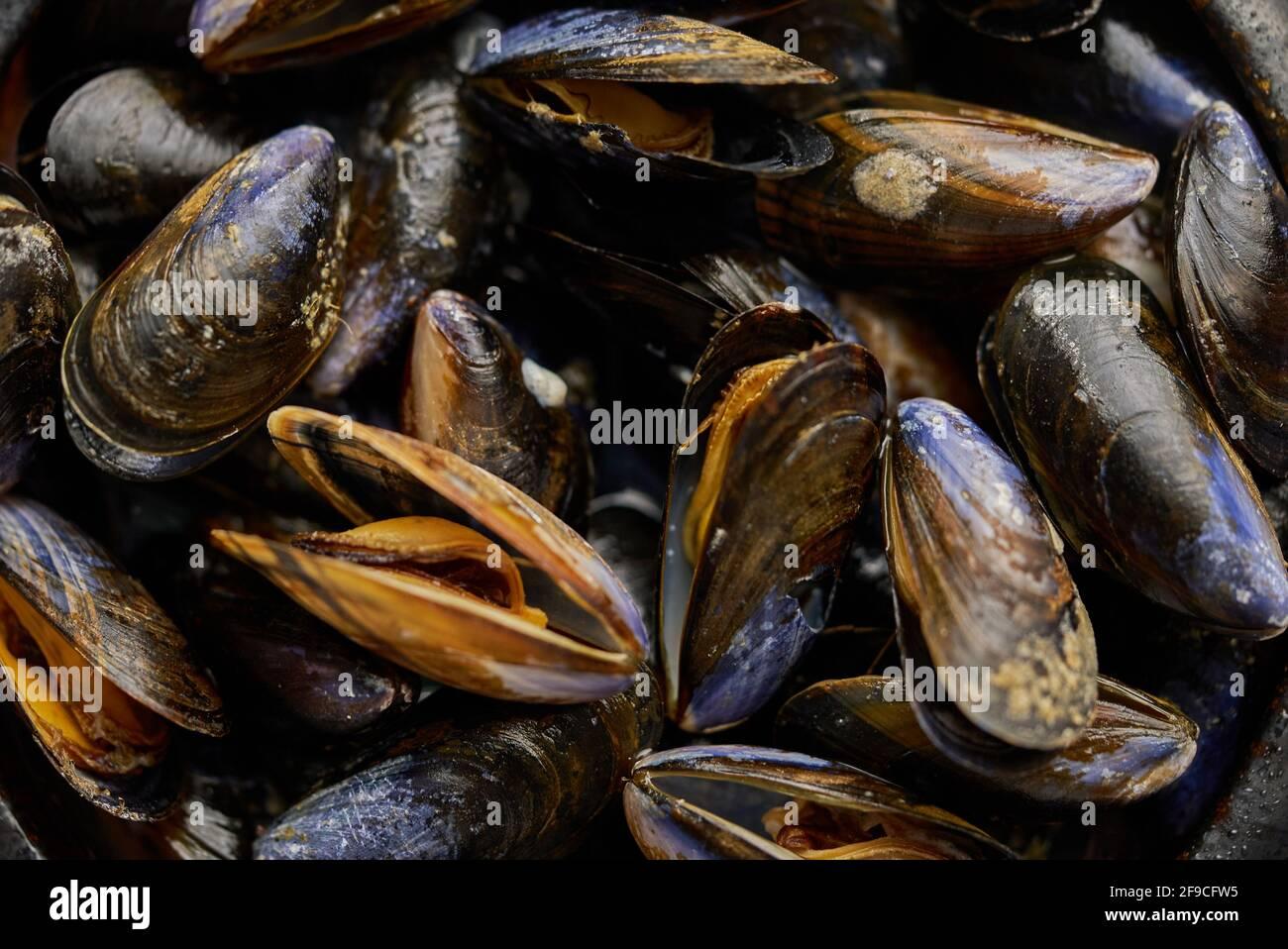 Primeros planos de mejillones de mar frescos y crudos recipiente de cerámica negro colocado en la oscuridad Foto de stock