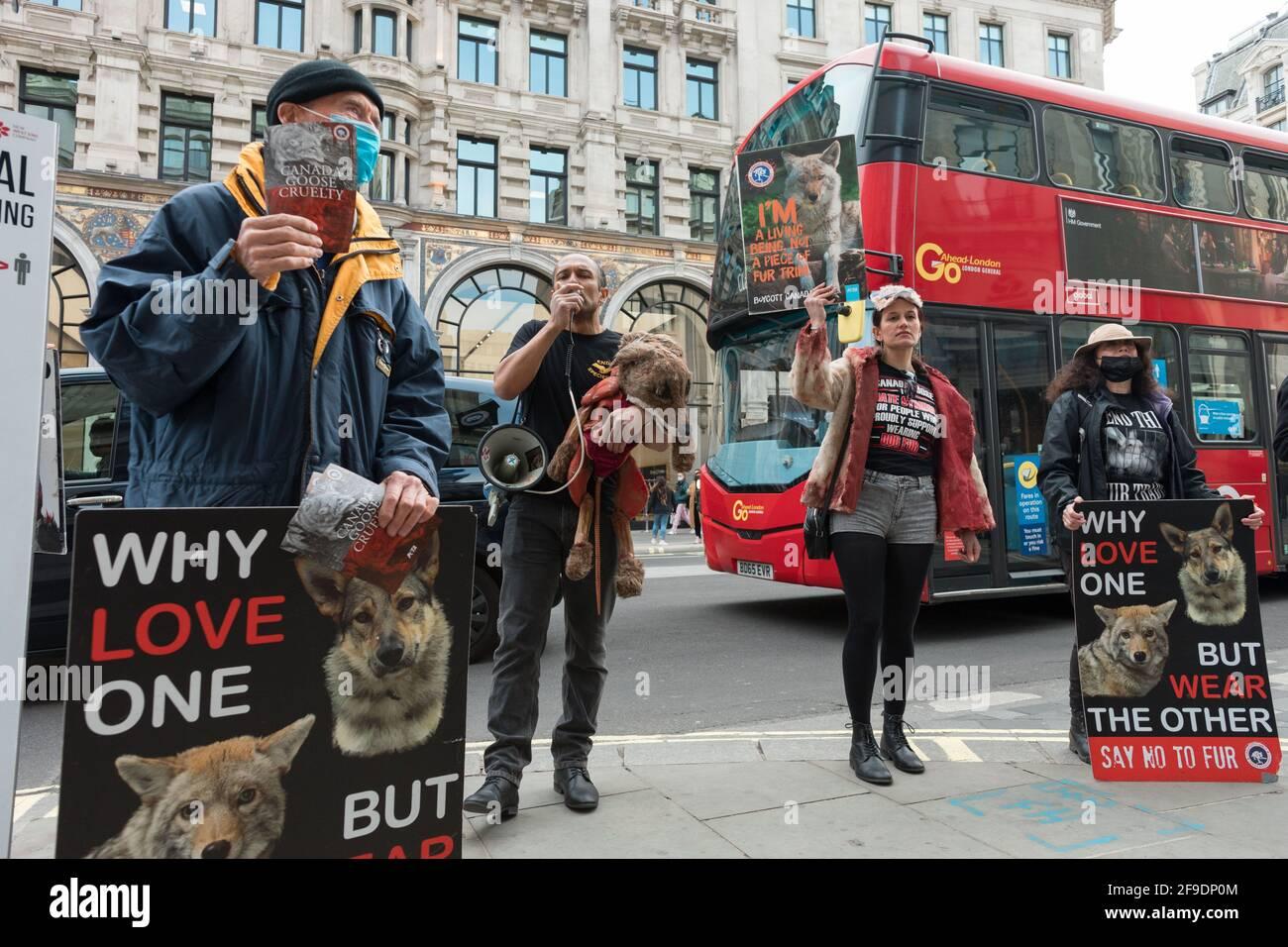 Un activista habla a través de un megáfono mientras sus colegas vieron llevar pancartas expresando su opinión durante la manifestación.Los activistas de la crueldad animal Peta UK (Gente por el Tratamiento Ético de los Animales) protestan contra el trato inhumano de los coyotes por el ganso canadiense, Fuera de Canadá tienda de gansos en Piccadilly Circus mostrando infografías detallando la crueldad animal que ocurre en la industria de la moda. (Foto de Belinda Jiao / SOPA Images/Sipa USA) Foto de stock