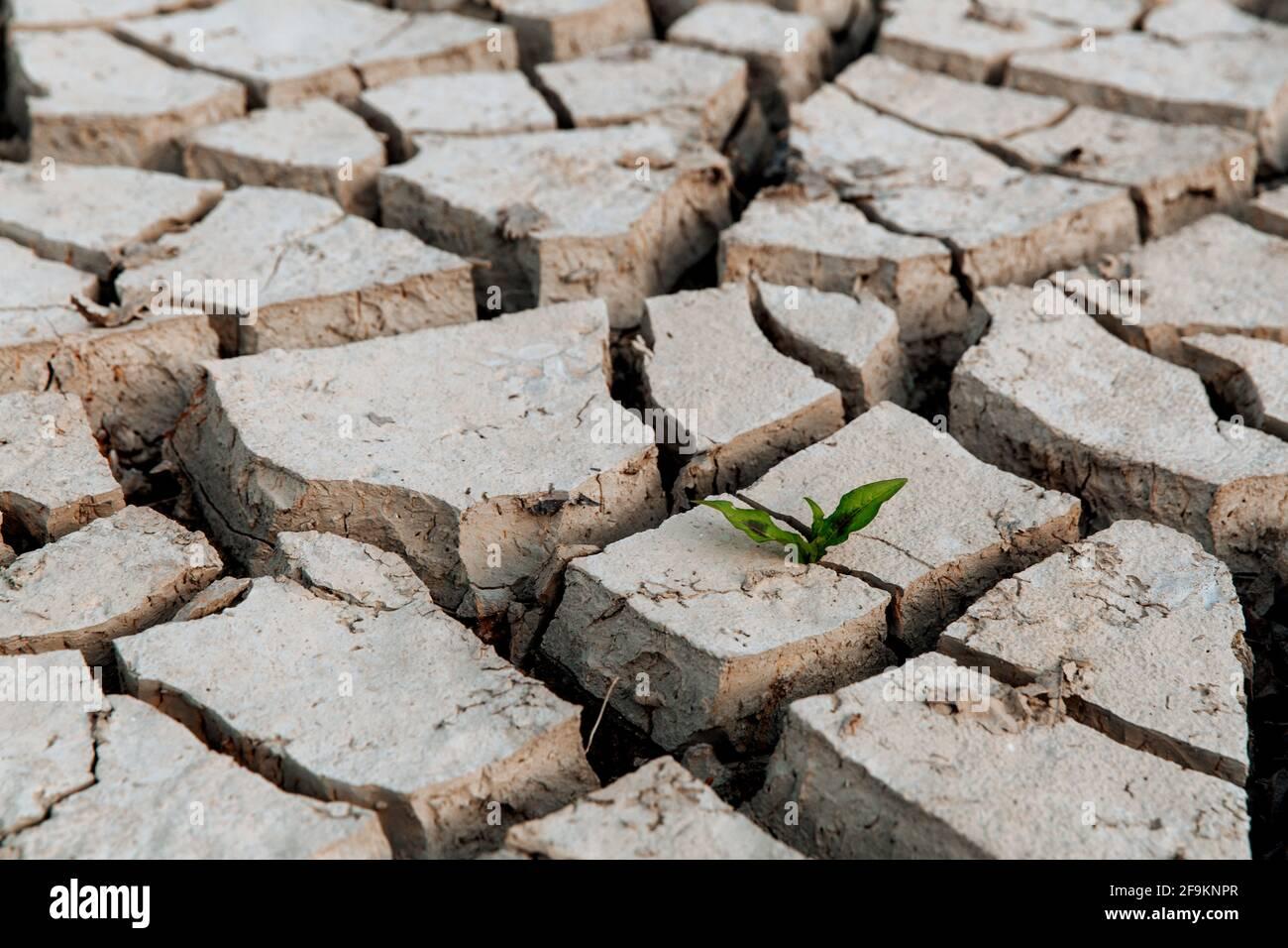 Un brota verde de la tierra seca y agrietada, la falta de lluvia, un desastre natural global, esperanza y concepto de sueños Foto de stock