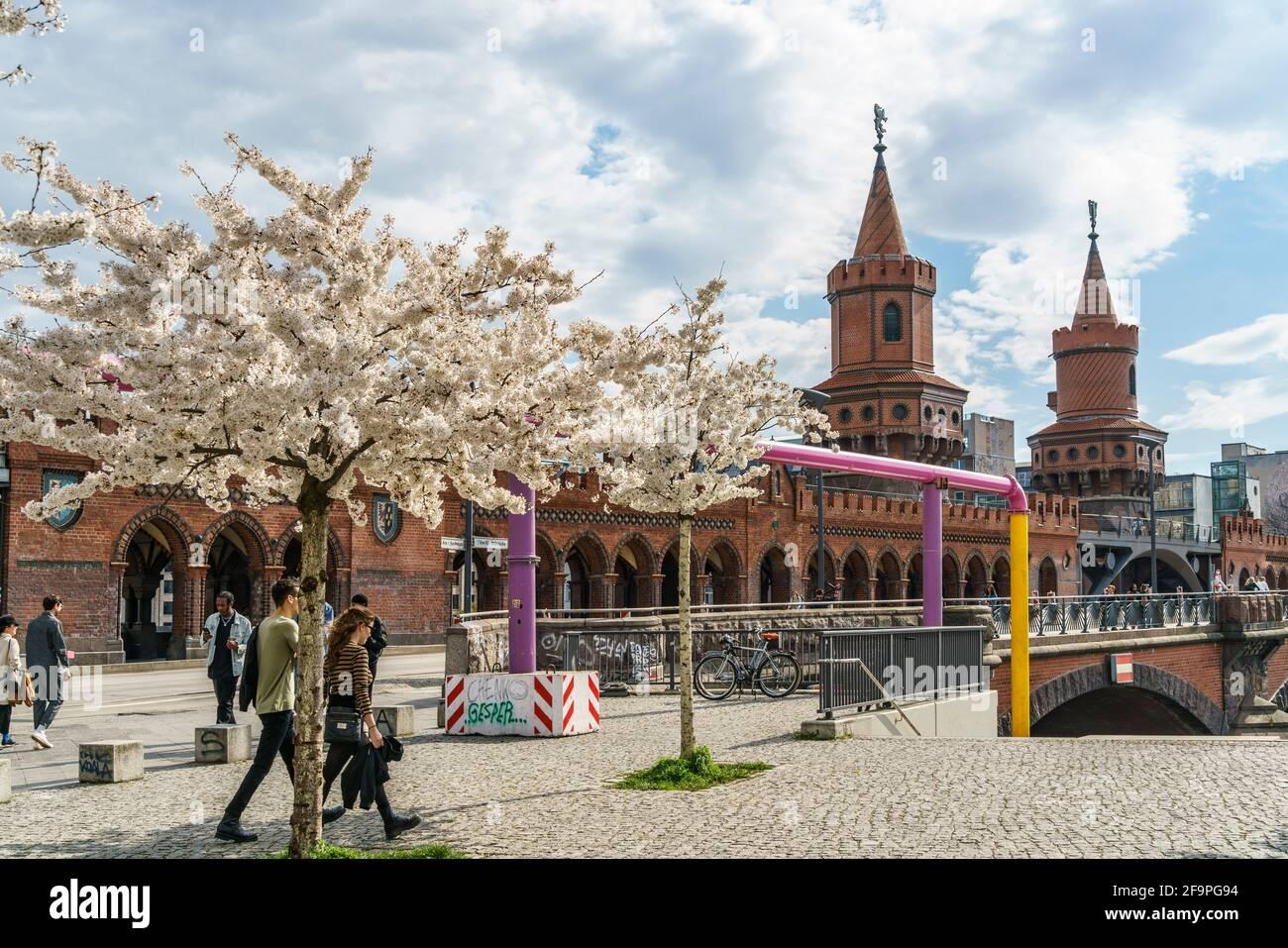 Frühling en Berlín, Kirschblüte, Oberbaumbrücke, Berlín Friedrichshain-Kreuzberg, Foto de stock