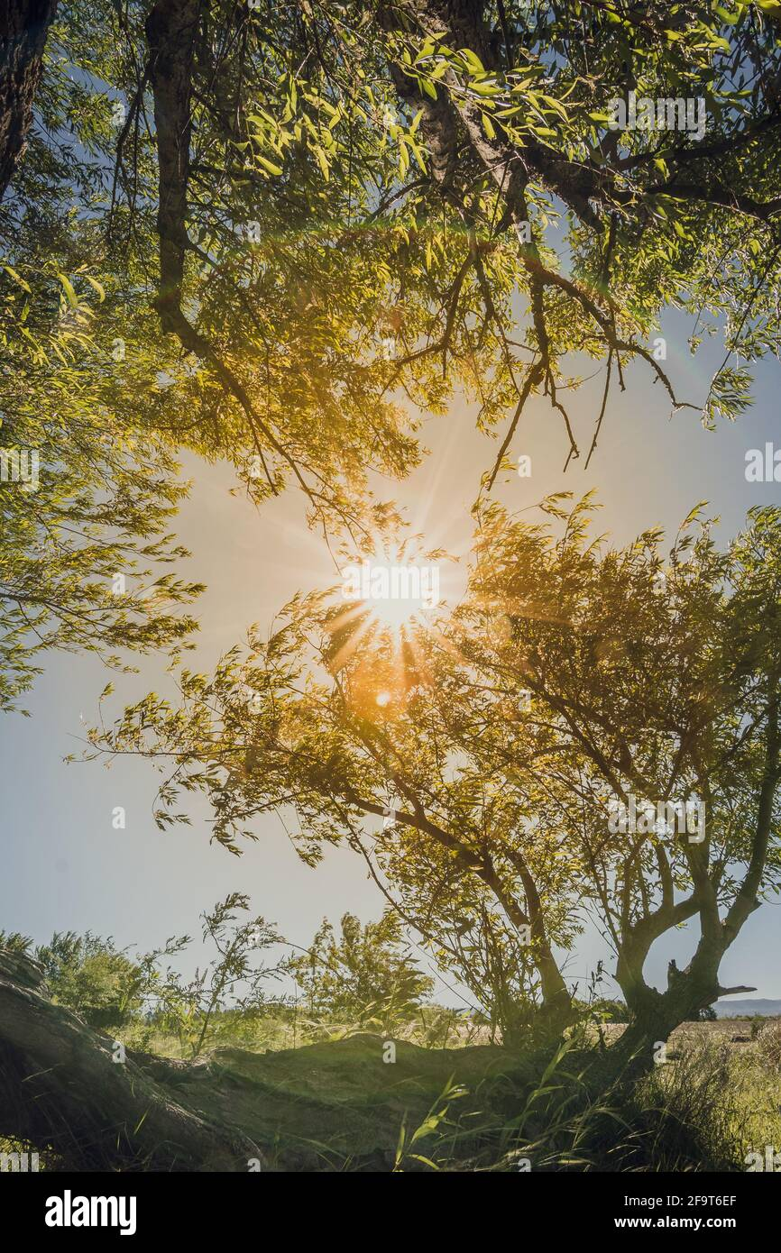 Tree with sunshine Foto de stock