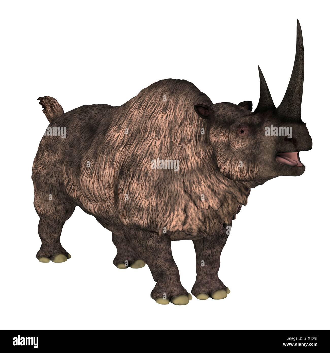 El rinoceronte de Woolly fue un mamífero herbívoro que vivió en Europa y Asia durante el período Pleistoceno. Foto de stock