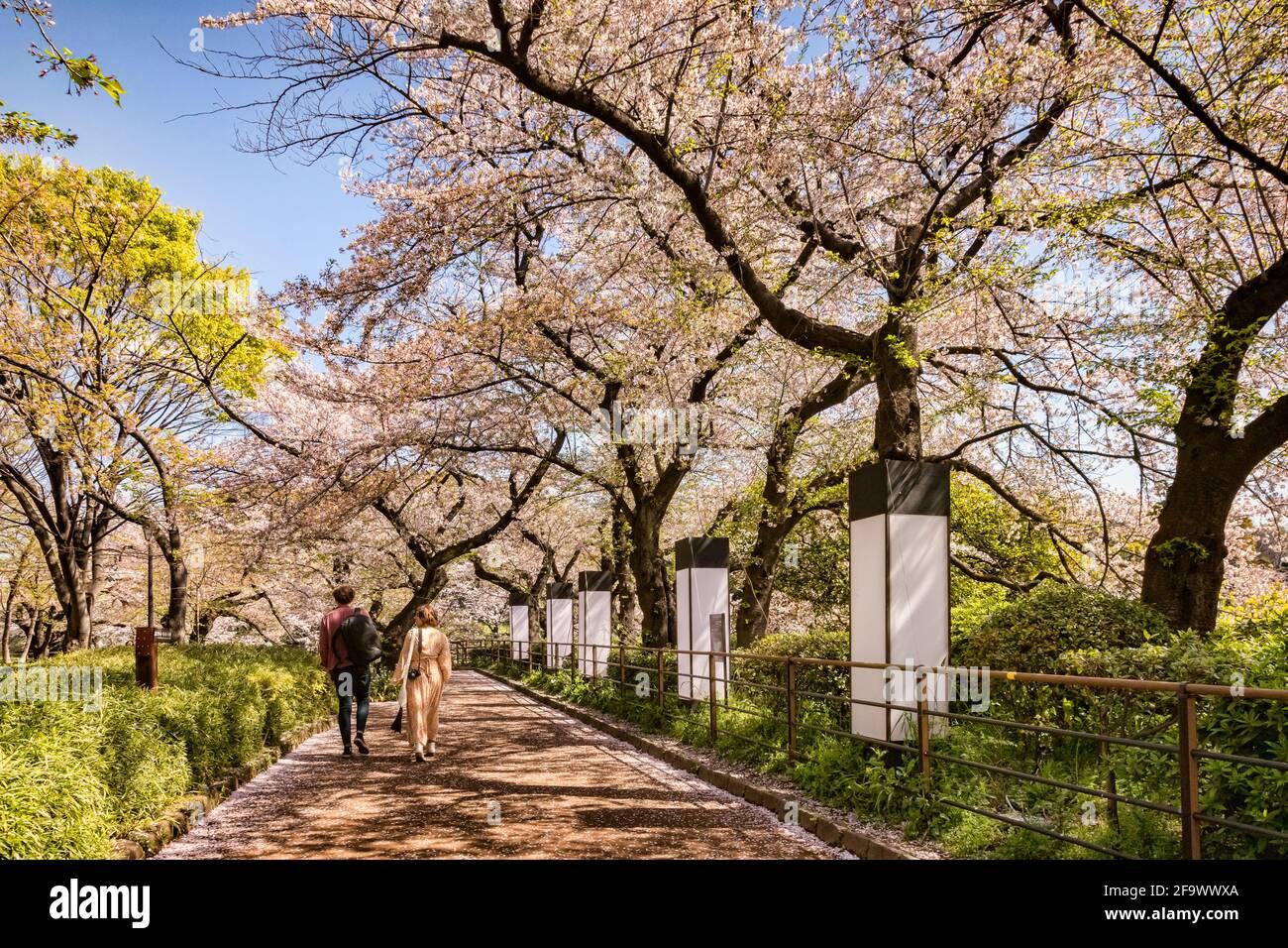 9 de abril de 2019: Tokio, Japón - Pasear junto al foso del Palacio Imperial, Tokio, en temporada de flores de cerezo. Foto de stock