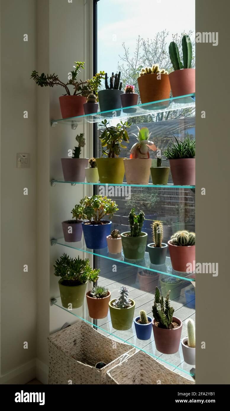 Potes de cactus y suculentos expuestos en frente de un alto salón con vistas a un jardín. Las ollas están pintadas a mano en la pintura de Annie Sloan Challk Foto de stock