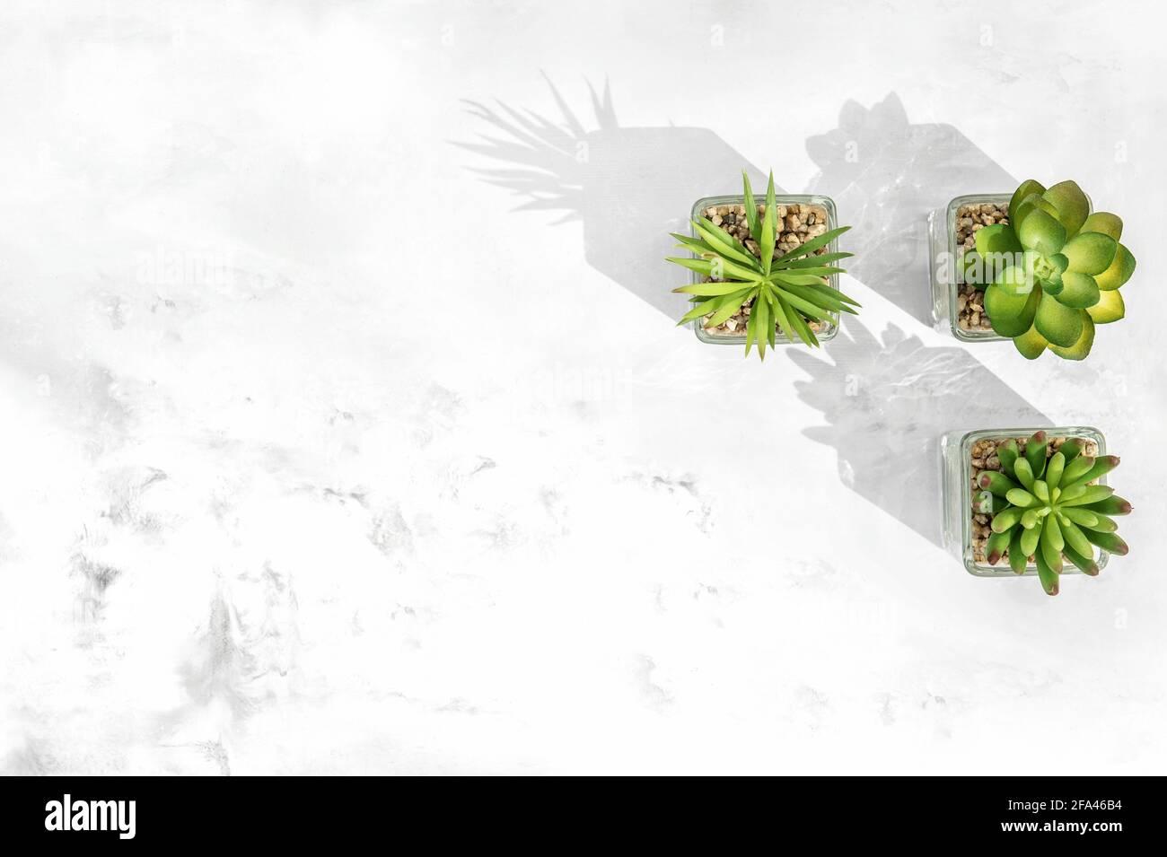 Plantas suculentas. Fondo de piedra de mármol de diseño plano y creativo Foto de stock