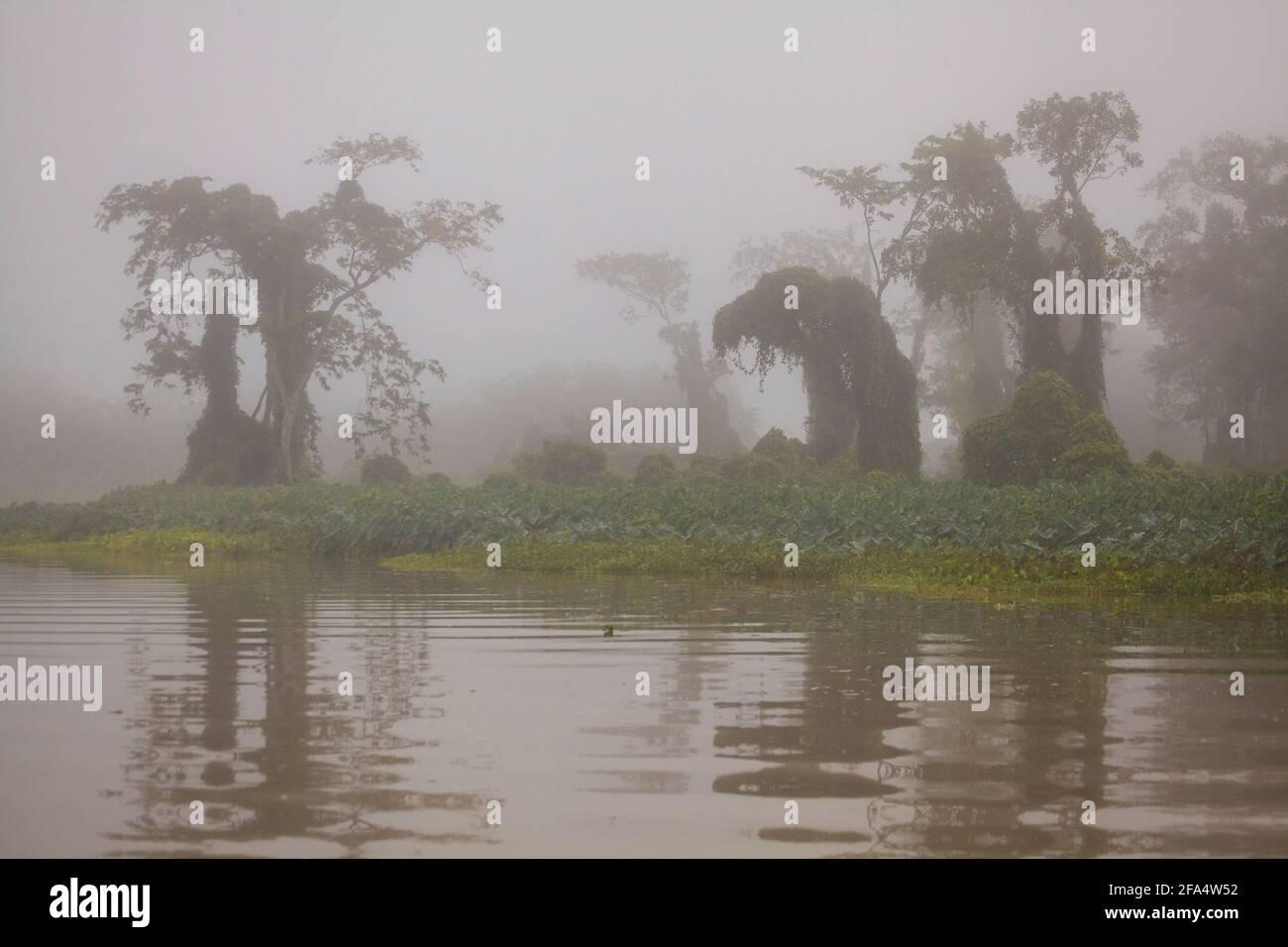 Bosque pluvial Misty a primera hora de la mañana a lo largo de Río Chagres en el Parque Nacional Soberania, República de Panamá. Foto de stock