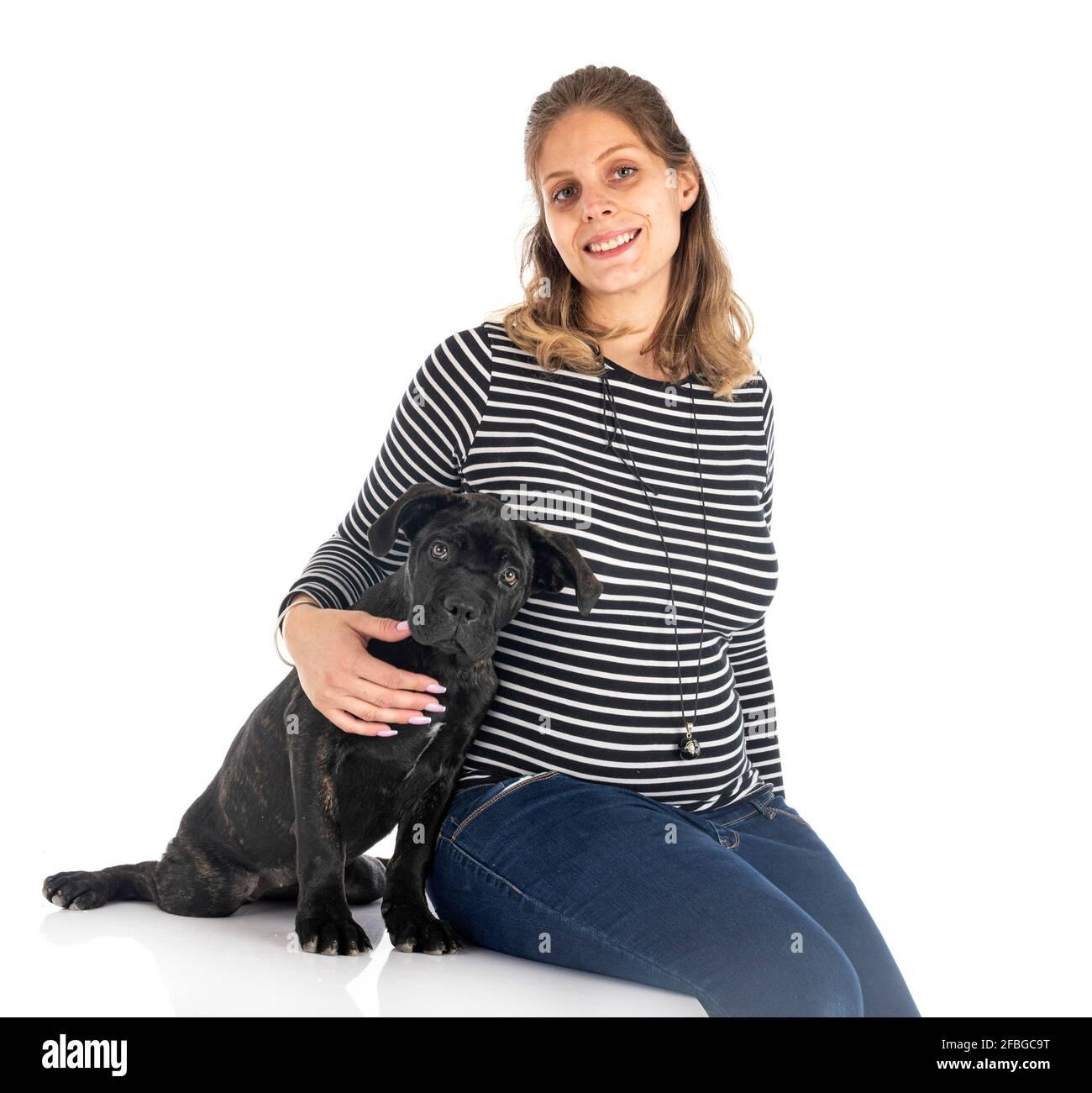 cachorro italiano mastiff y mujer delante de fondo blanco Foto de stock