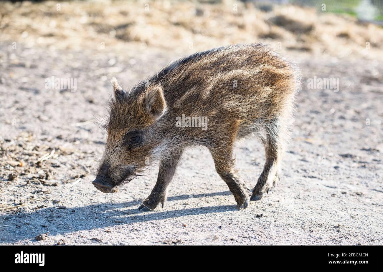 jovencito boarlet caminando al aire libre en primavera Foto de stock