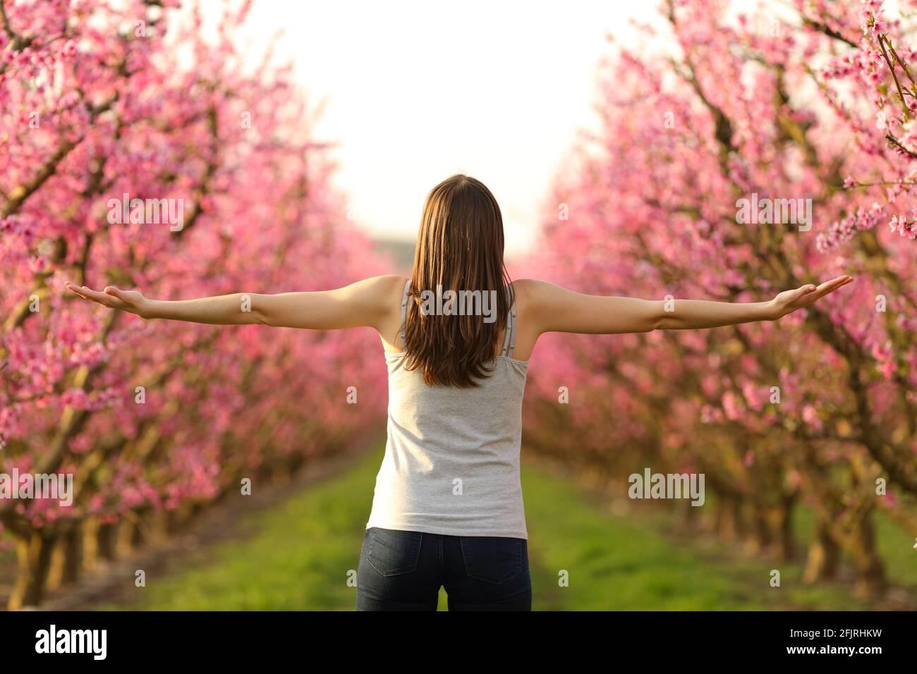 Vista posterior retrato de una joven mujer estirando los brazos celebrando primavera en un campo rosa Foto de stock