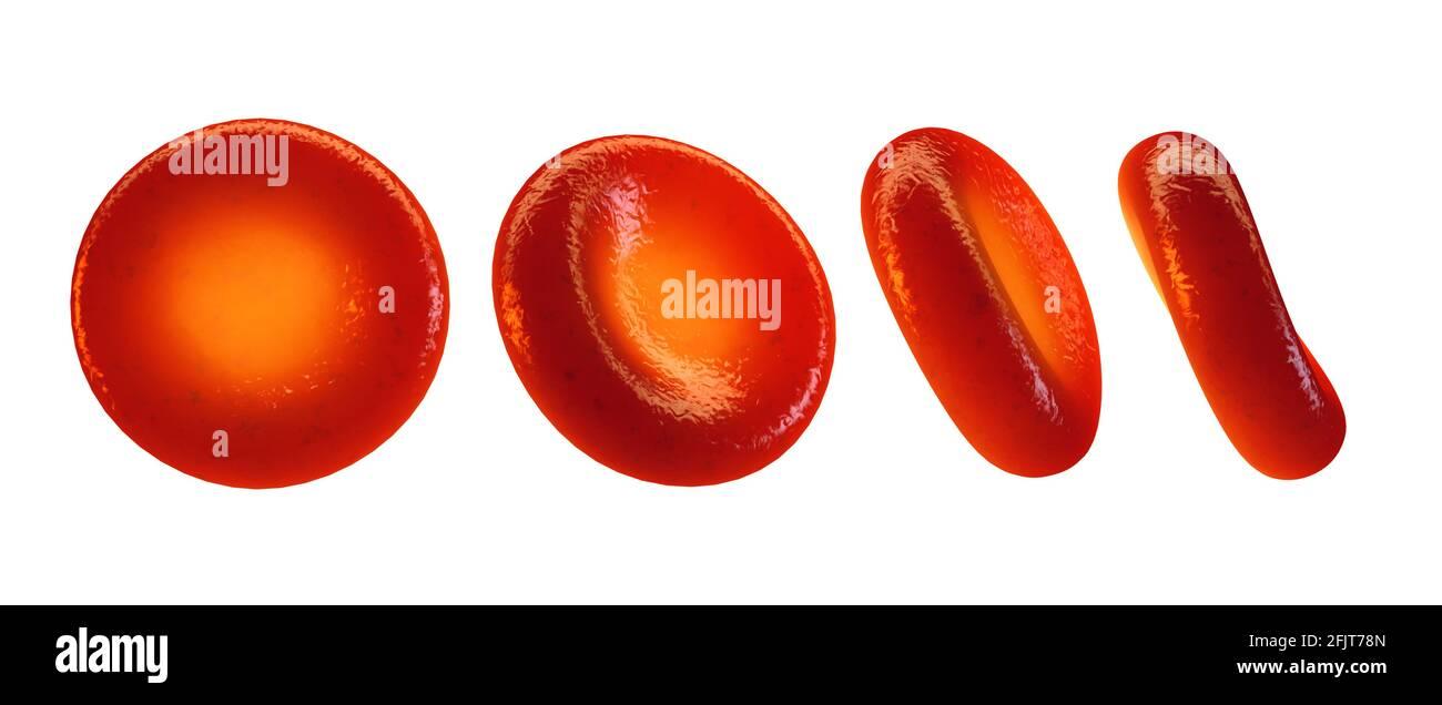 Glóbulos rojos vistos desde diferentes ángulos aislados sobre blanco. Las células sanguíneas (eritrocitos) suministran oxígeno a todos los tejidos corporales. Foto de stock