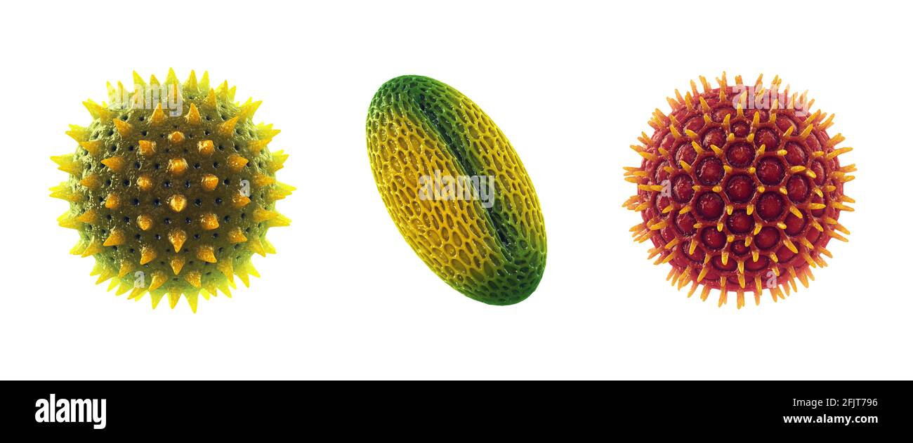 Conjunto de granos de polen aislados sobre blanco. La alergia al polen también se conoce como fiebre del heno o rinitis alérgica. Foto de stock