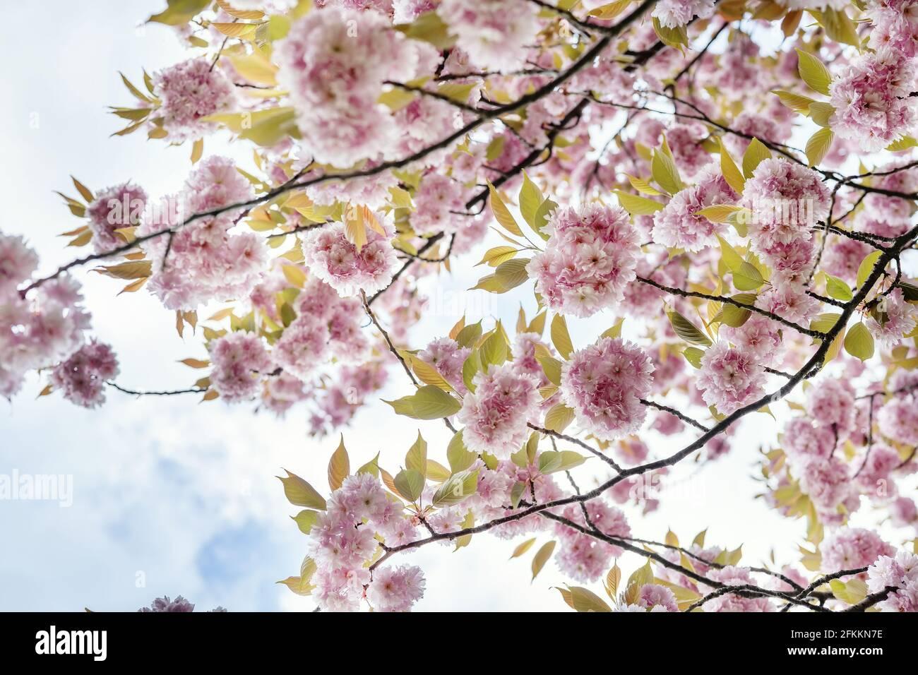 Sakura fkk CLUB Anwesenheitslisten