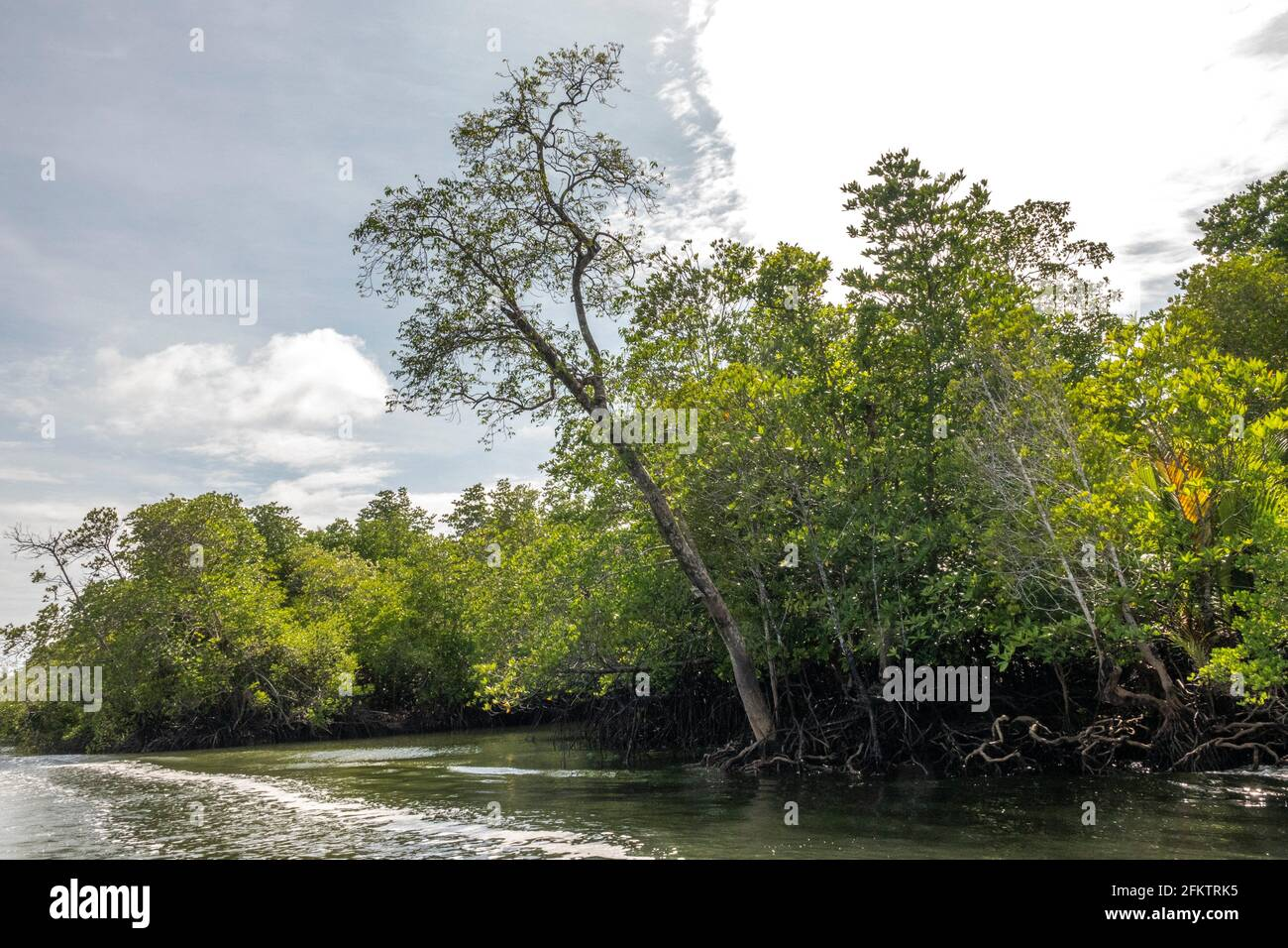 Crucero por la orilla del río Sibu Laut-Telaga Air, Matang, Sarawak, Malasia Foto de stock