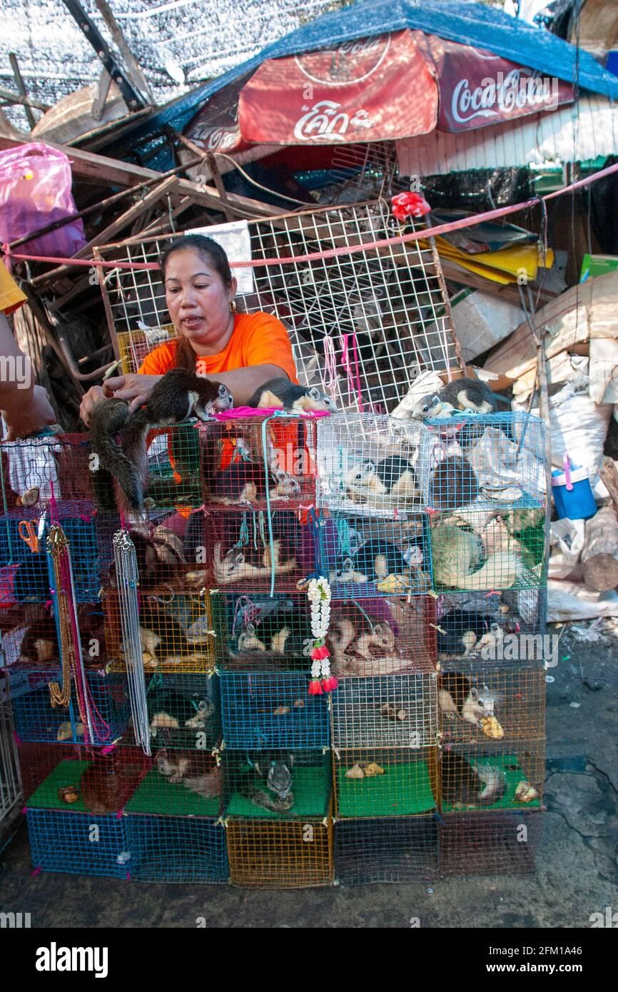 Animales salvajes a la venta en un puesto en el mercado de animales en Bangkok, Tailandia Foto de stock