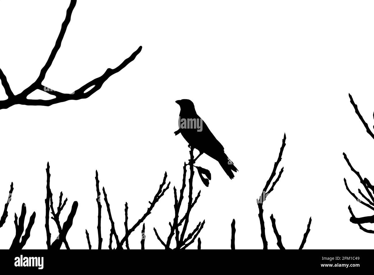 Aves encaramadas en un árbol, siluetas al atardecer fotografiadas en Sataf, Israel Foto de stock