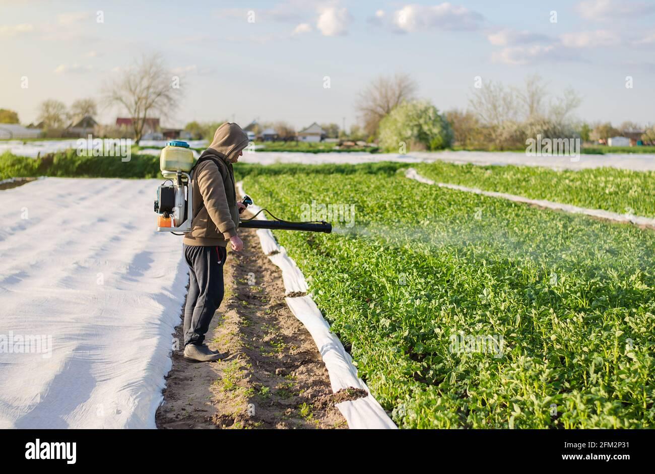 El granjero masculino con un pulverizador procesa los arbustos de la patata con los productos químicos. Protección de plantas cultivadas contra insectos e infecciones fúngicas. Aumentado Foto de stock