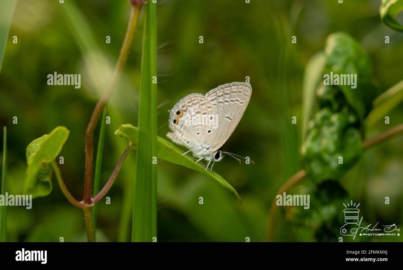 Primer plano de la mariposa Foto de stock