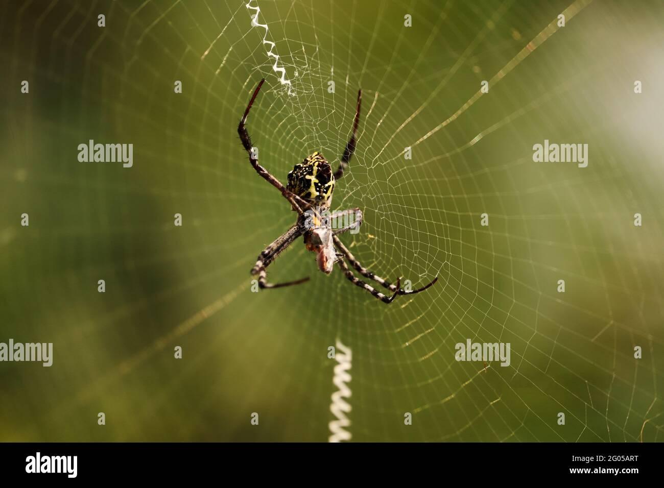 Araña en Wed Foto de stock