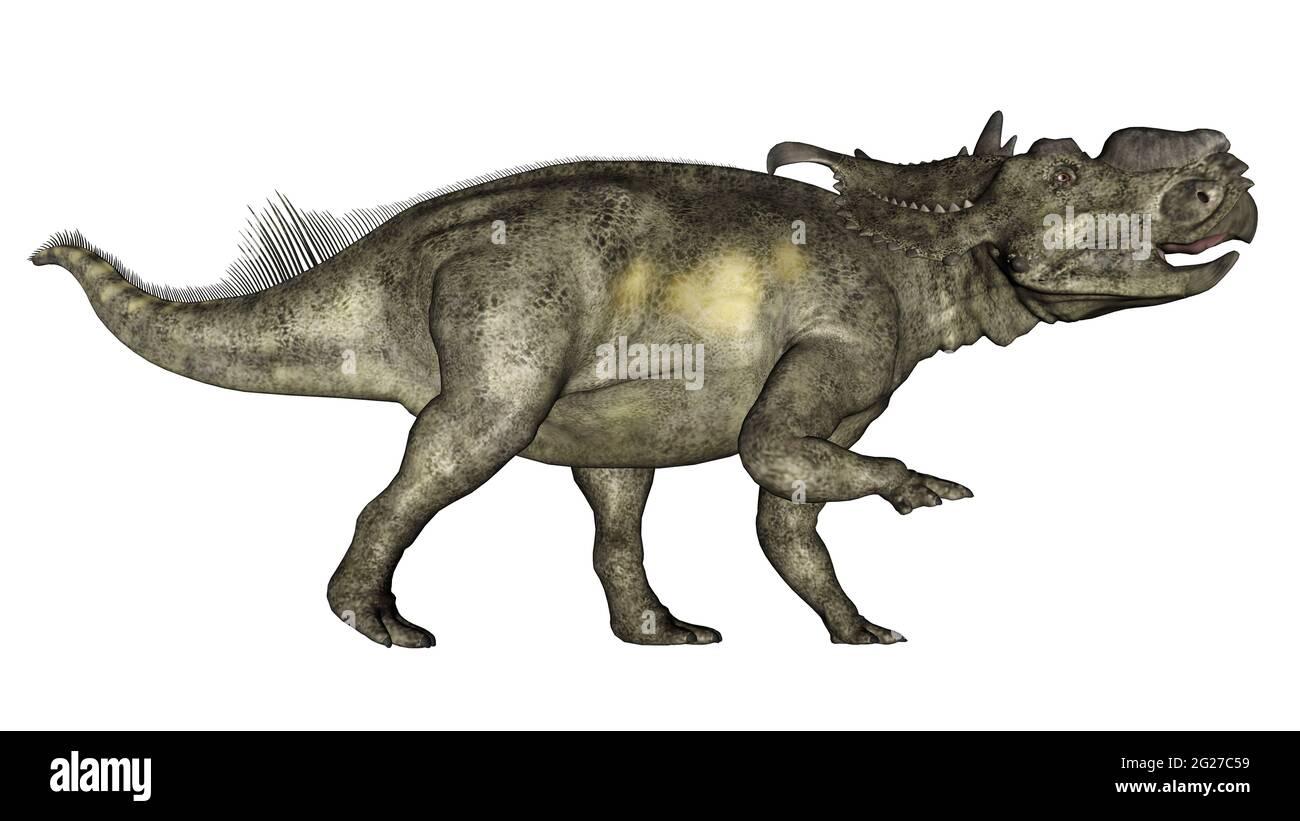 Pachyrhinosaurus dinosaurio caminando, aislado sobre fondo blanco. Foto de stock