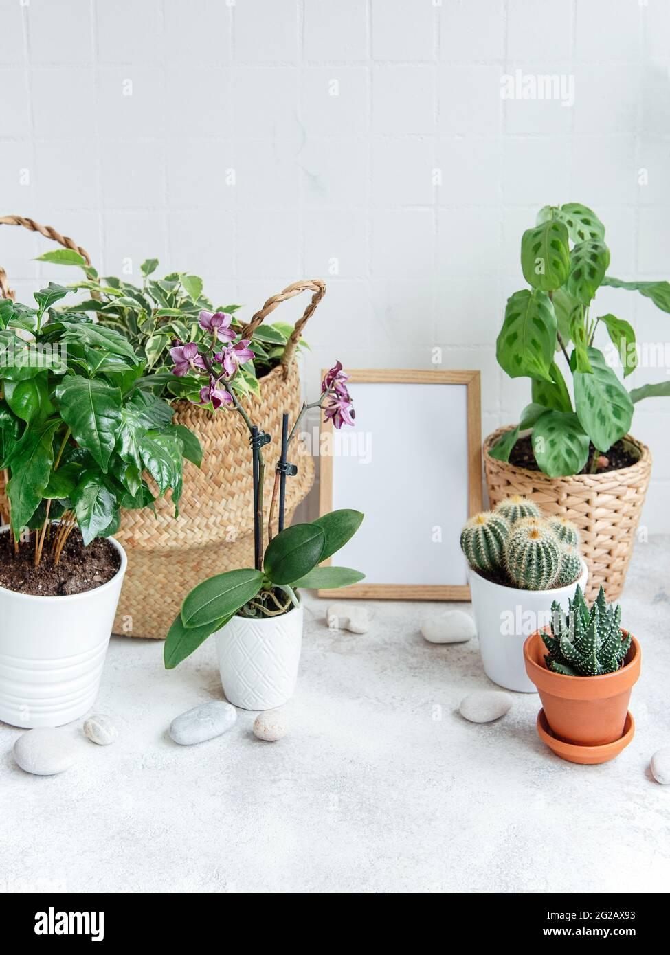 Habitación llena de un montón de plantas modernas, jardín con marco de póster falso. Foto de stock