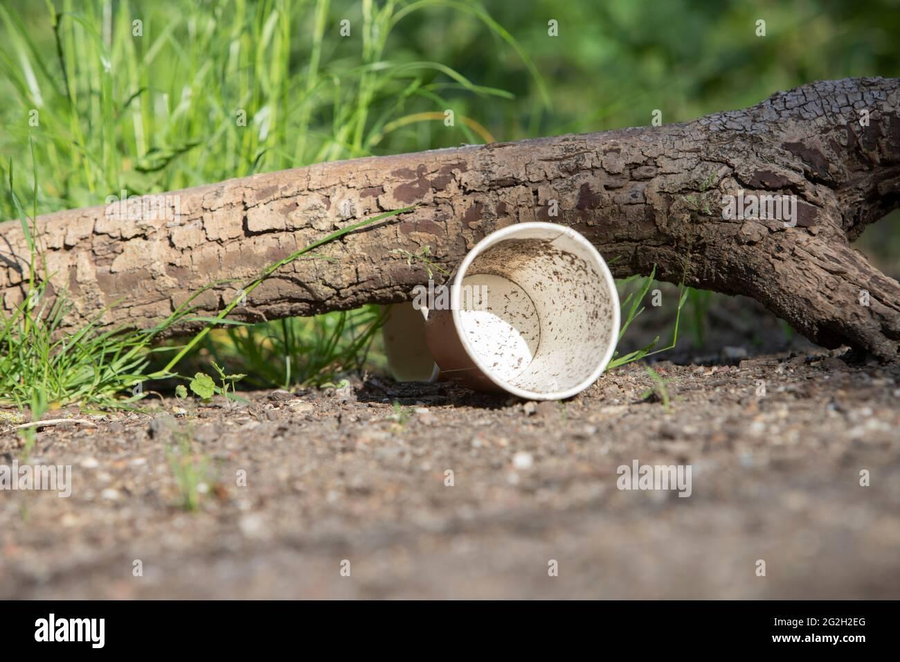 se ha desechado el vaso de papel en el suelo del bosque Foto de stock