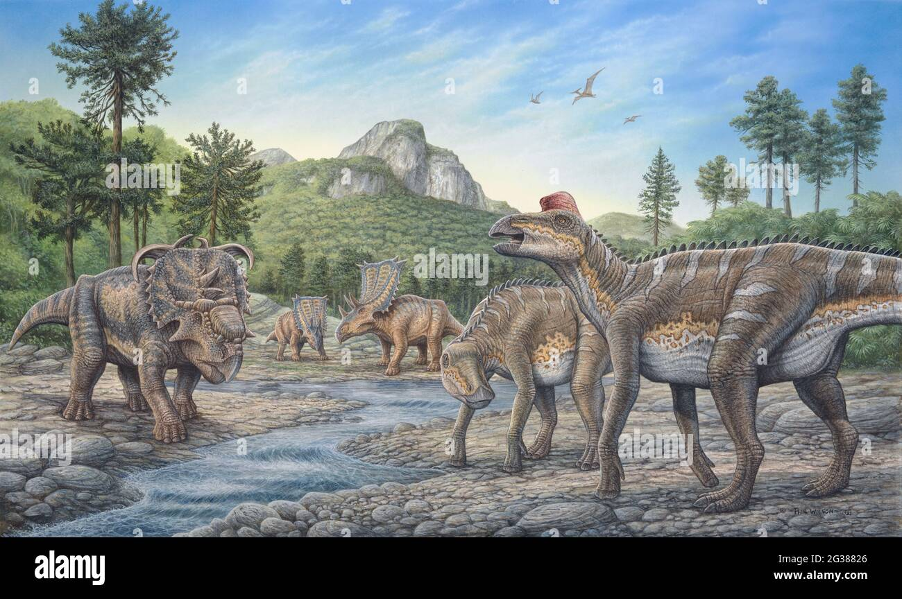 Los dinosaurios Pachyrhinosaurus, Chasmosaurus y Edmontosaurus pastan juntos a lo largo de un arroyo. Foto de stock