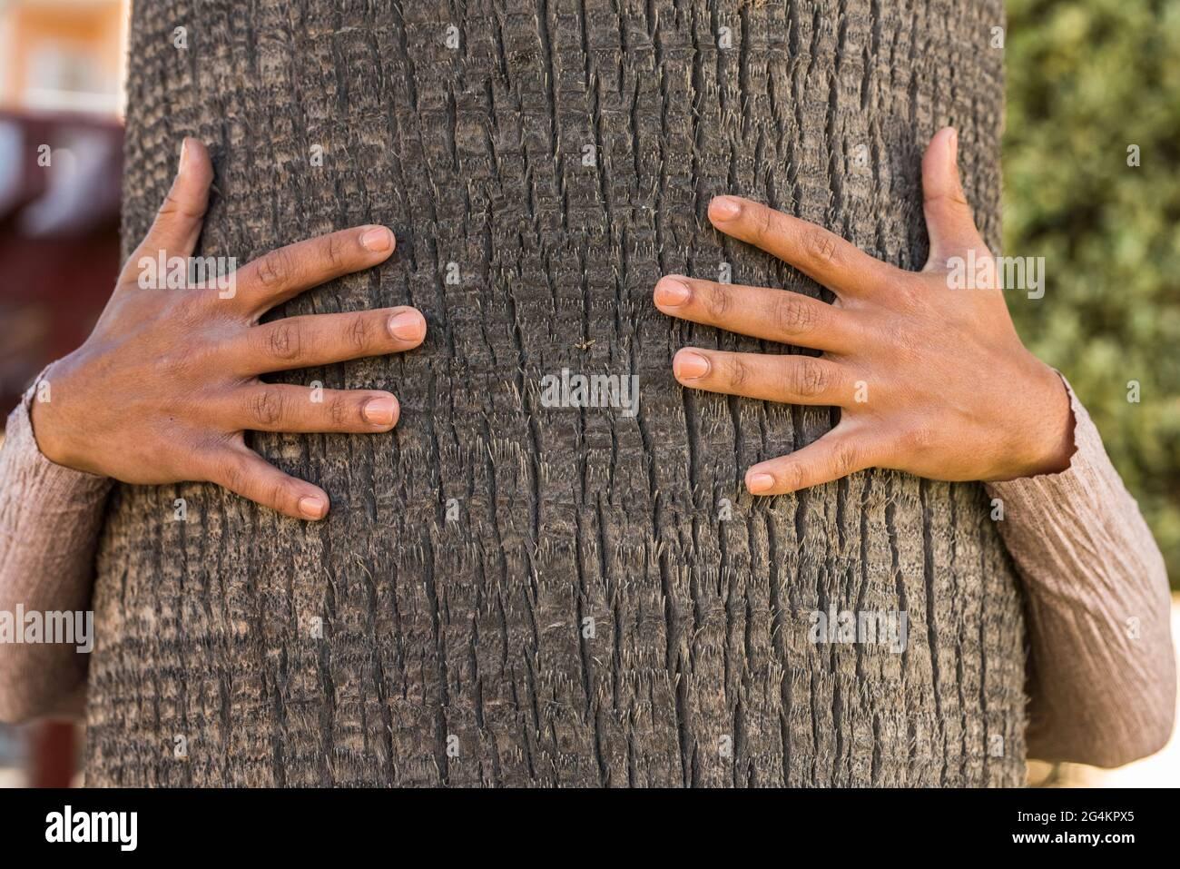 Manos abrazando y protegiendo el árbol de palma - naturaleza medio ambiente concepto de protección segura - árboles de tronco cerca y el abrazo humano Foto de stock
