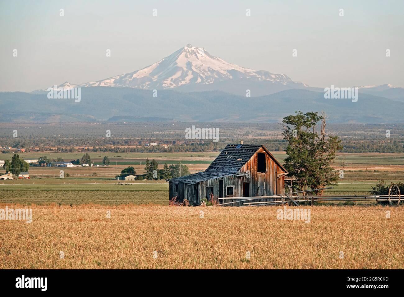 Una granja de la era de la depresión que ha sido abandonada por sus dueños, en un campo de trigo cerca de Culver, Oregon. El Monte Jefferson está en el fondo. Foto de stock