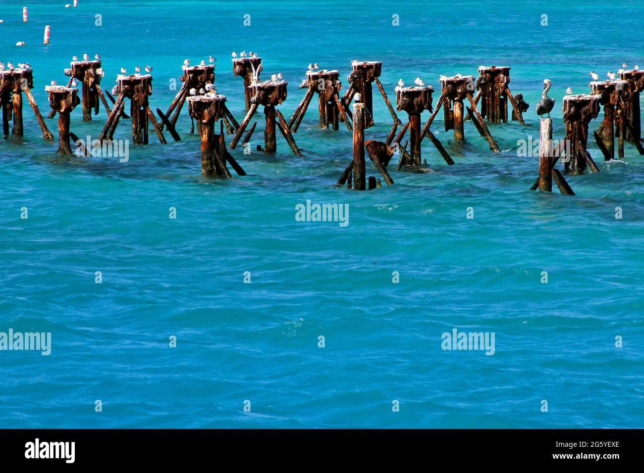 Los pájaros percan en puestos en las aguas del Parque Nacional de Tortugas Secas. Foto de stock