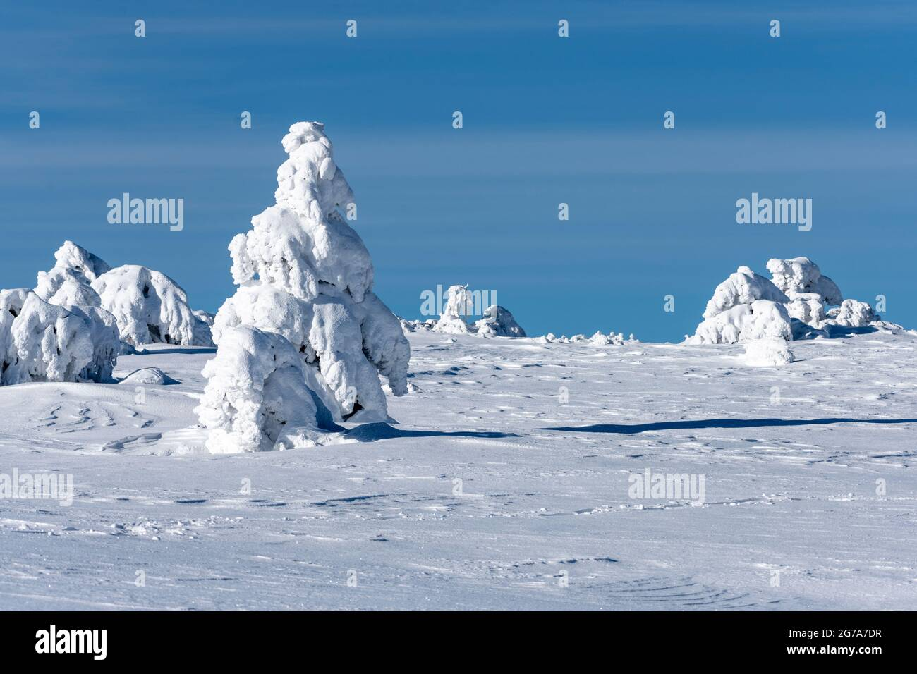 Alemania, Baden-Württemberg, Selva Negra, Hornisgrinde, árboles nevados. Foto de stock
