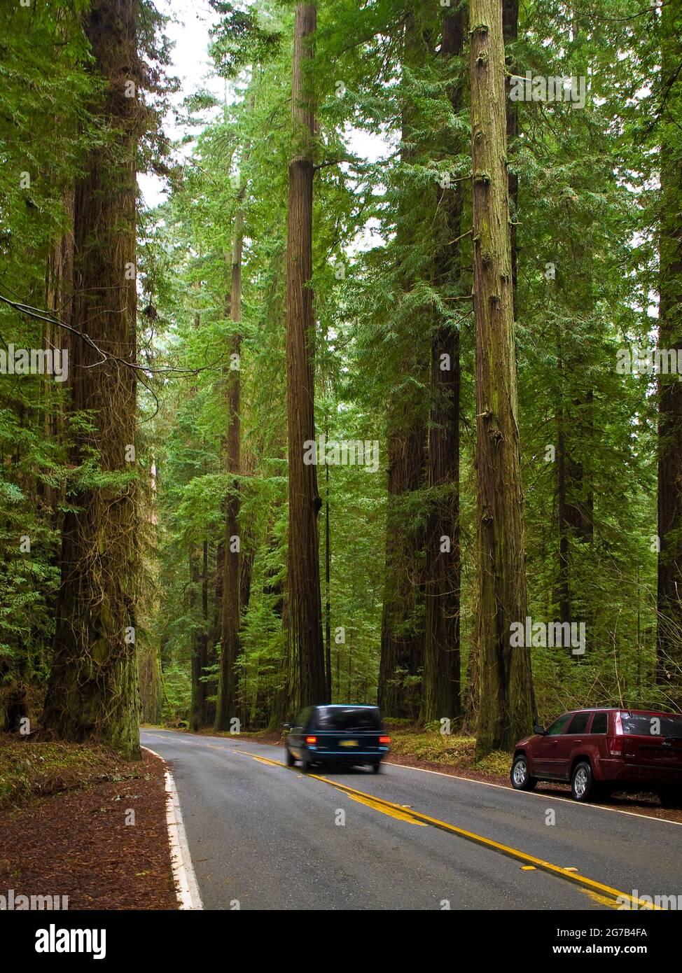 Avenue of the Giants, Humboldt Redwoods State Park, California, Estados Unidos Foto de stock