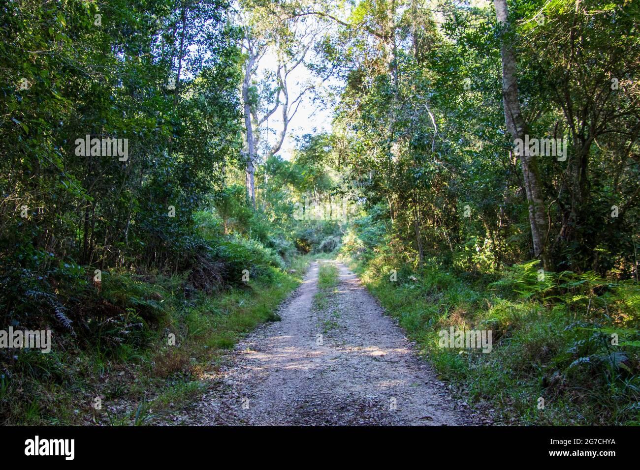 Una pista de tierra conduce a través del bosque a un destino desconocido Foto de stock