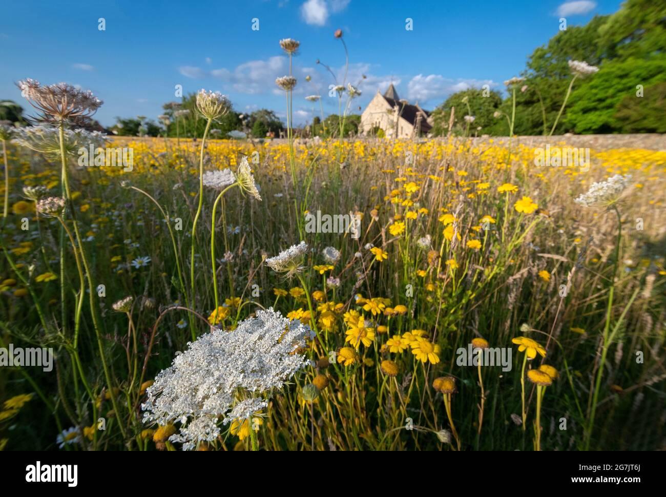 Prado de flores silvestres recién creado en un antiguo campo en West Wittering, Chichester, West Sussex, Inglaterra Foto de stock