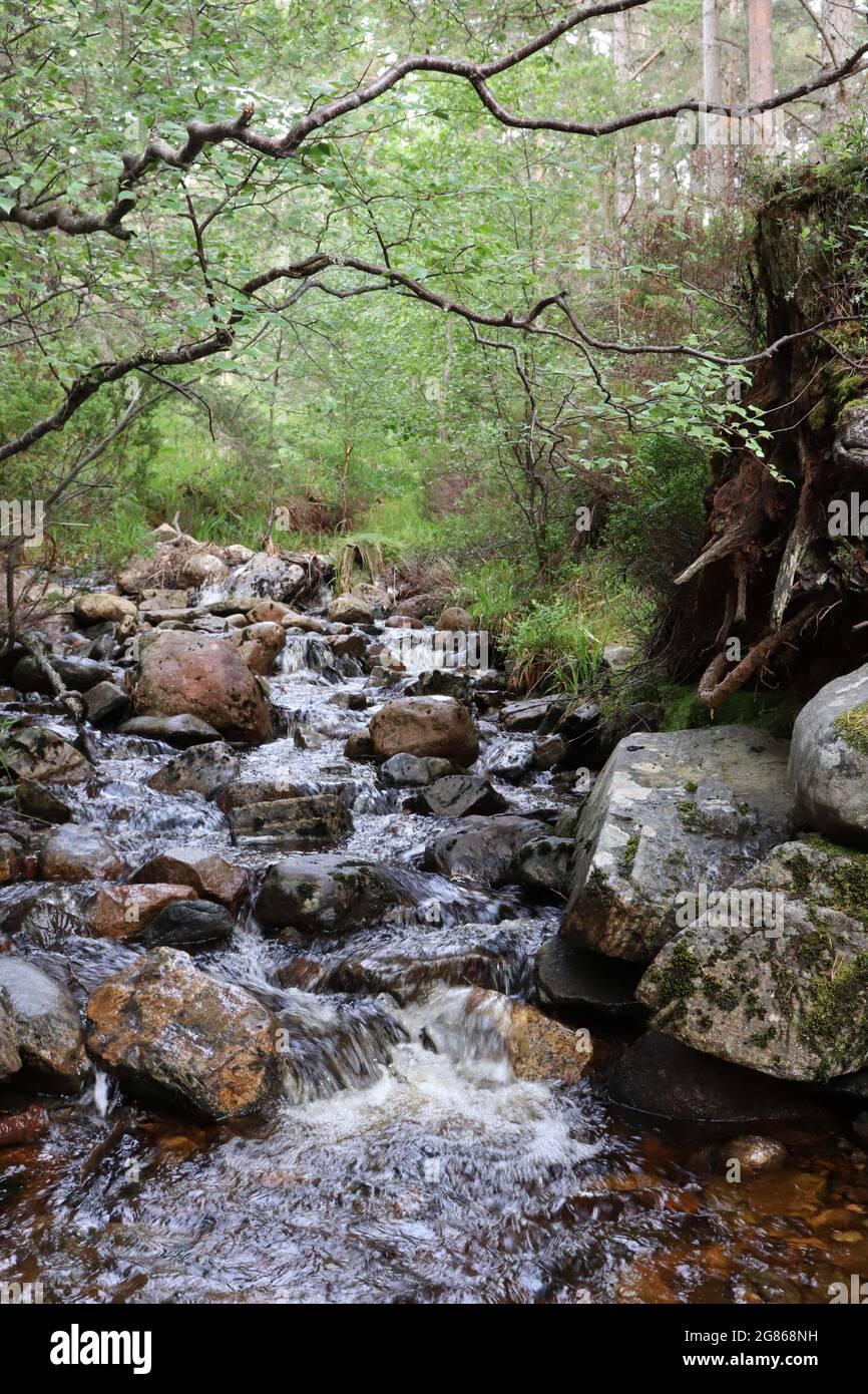 Arroyo de bosque con rocas Foto de stock