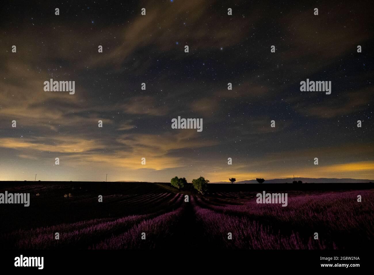 Foto nocturna de campo de lavanda en francia, provenza valensole - hermosa vista de las flores violeta y estrellas en el cielo - perfume fragancia producción p Foto de stock