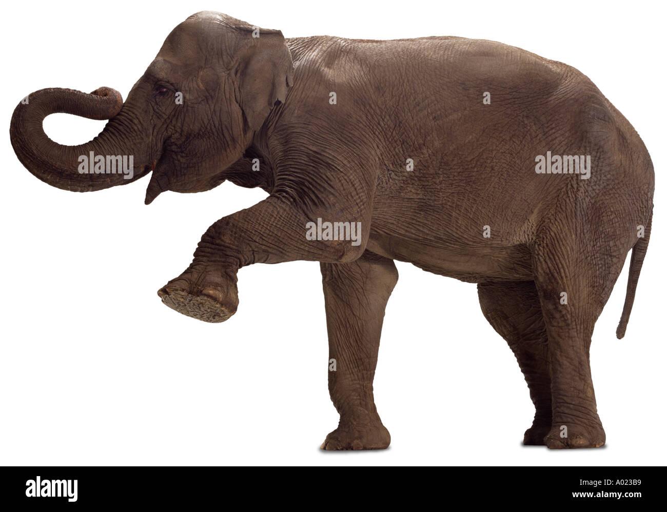 elefante Imagen De Stock