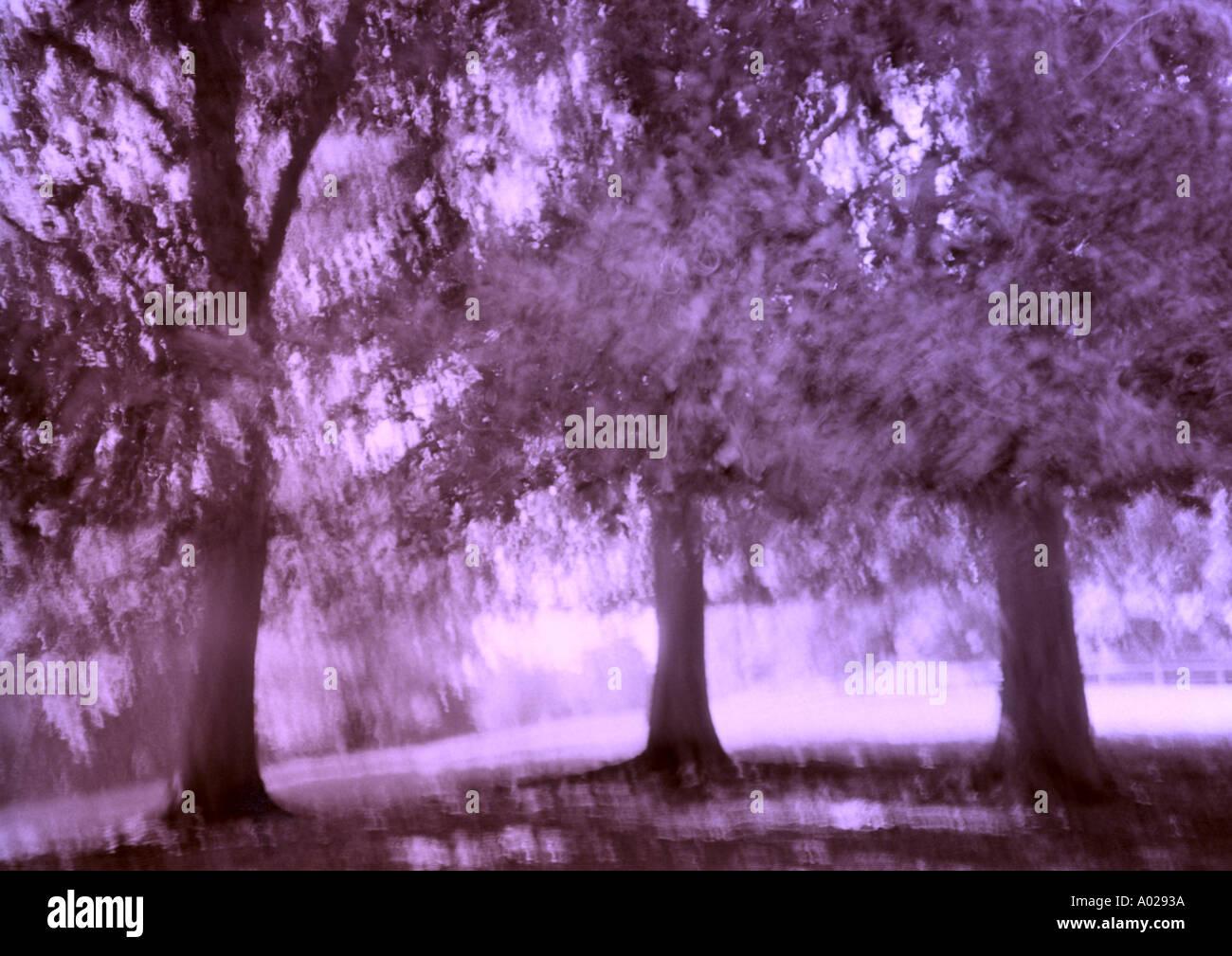 Árboles Imagen De Stock