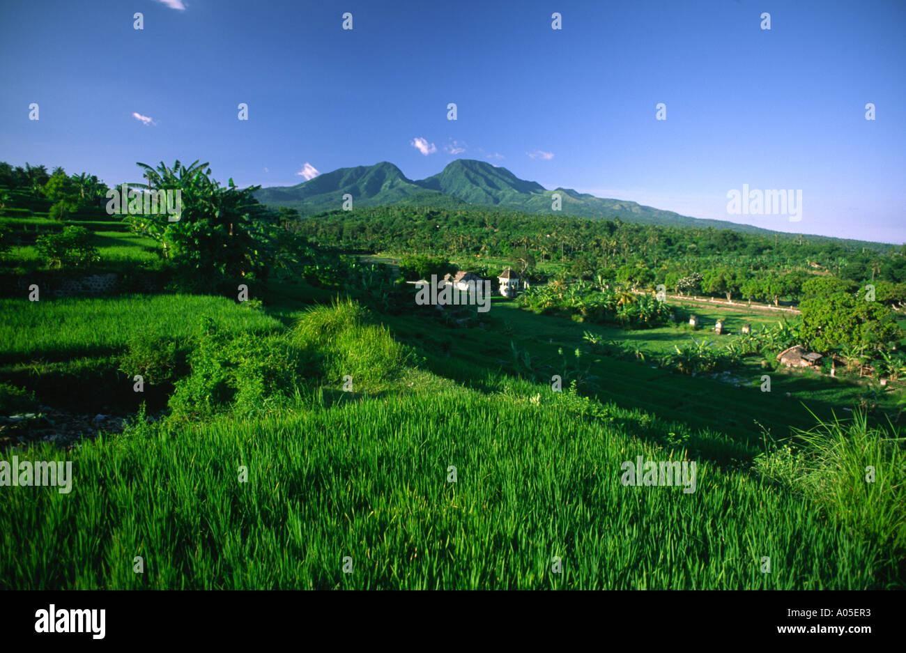 Indonesia Bali Campos De Arroz En Terrazas Volcán Monte