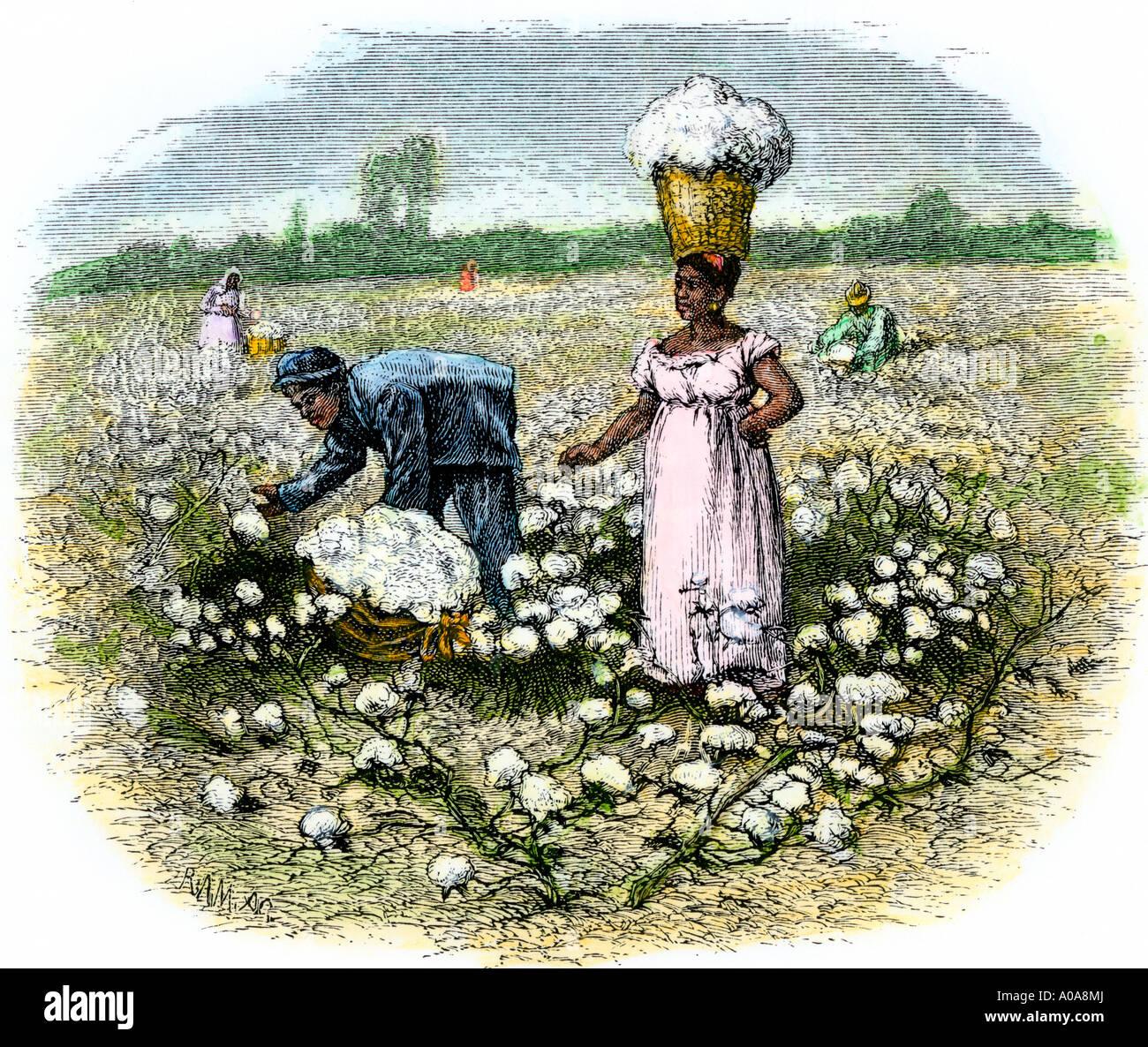 Los esclavos americanos africanos recoger algodón en una plantación en el sur profundo de los 1800s. Xilografía coloreada a mano Imagen De Stock