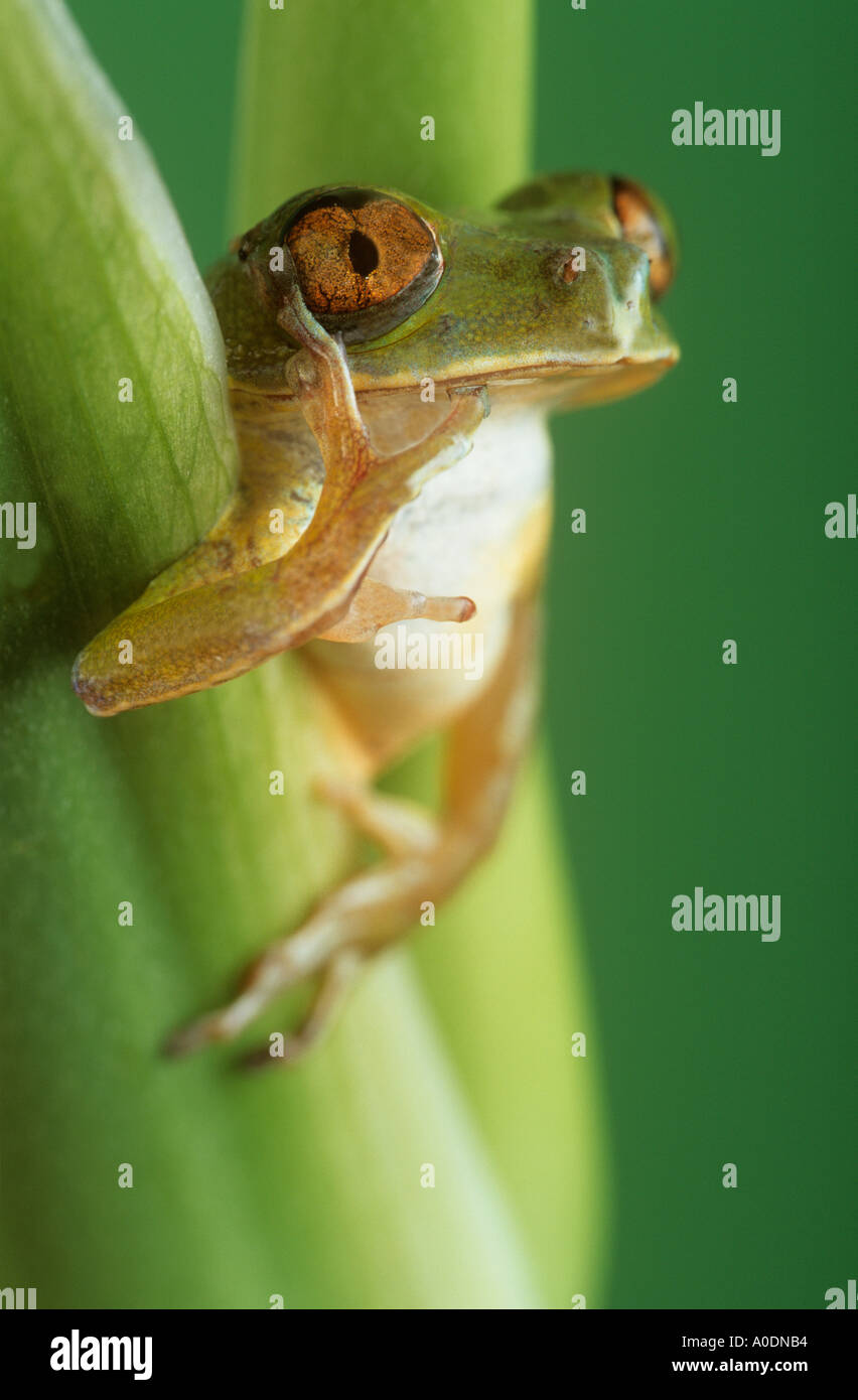 Talking Frog Imágenes De Stock & Talking Frog Fotos De Stock - Alamy
