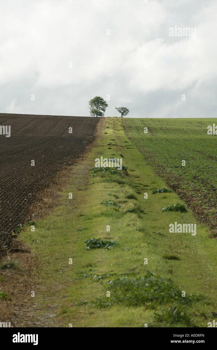 Resumen pista agrícola con dos árboles al final un singular paisaje ...