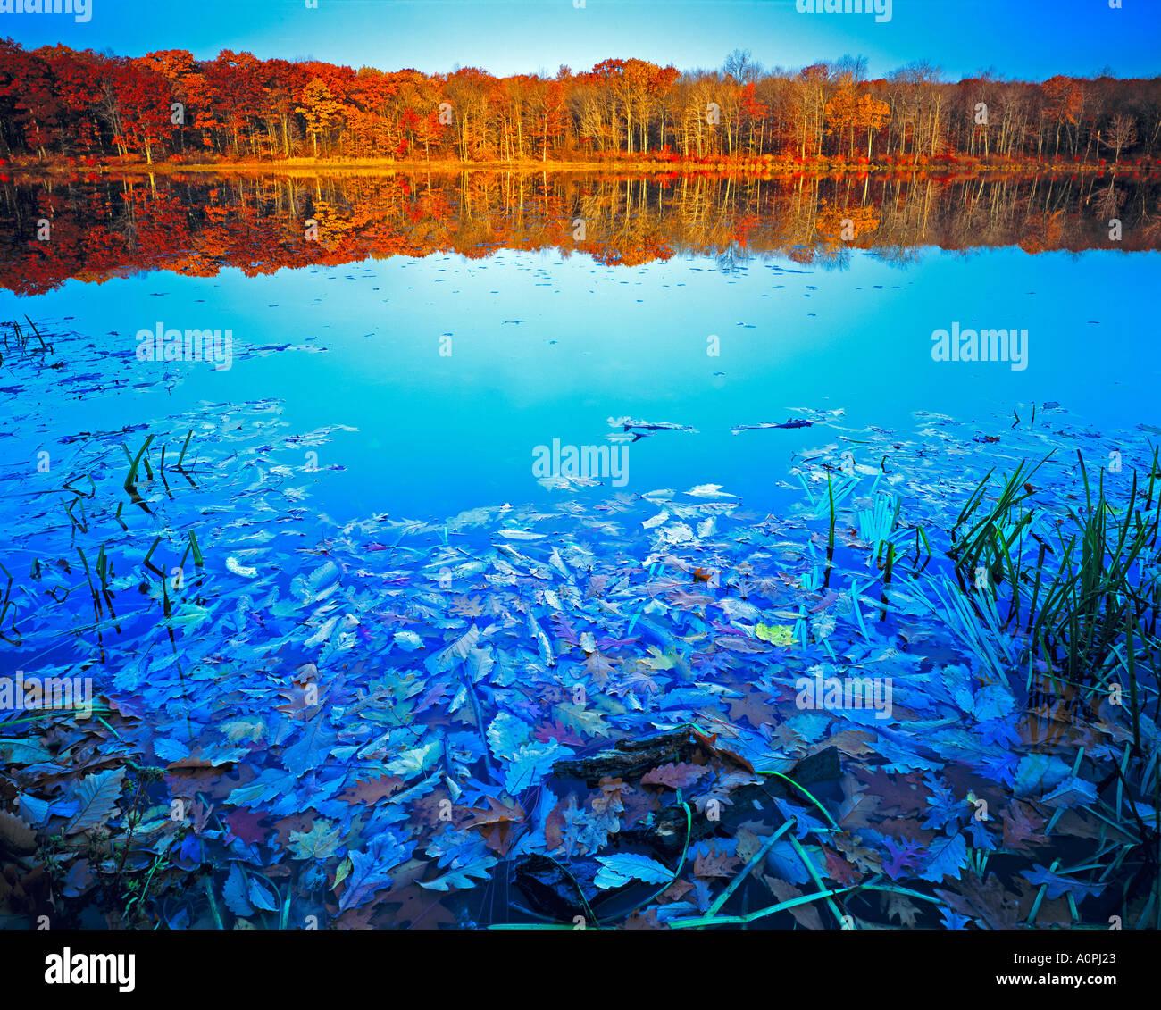 Colores del Otoño reflexiones Stokes Montañas Appalachian State Forest, Nueva Jersey Imagen De Stock