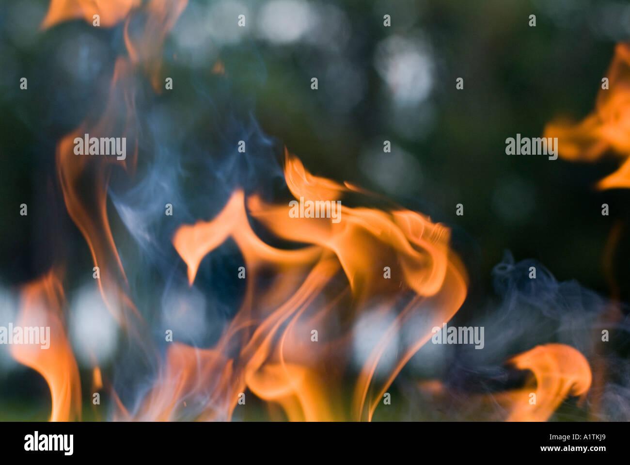 Incendio en un bosque de Francia Aquitania Landas Mano Imagen De Stock
