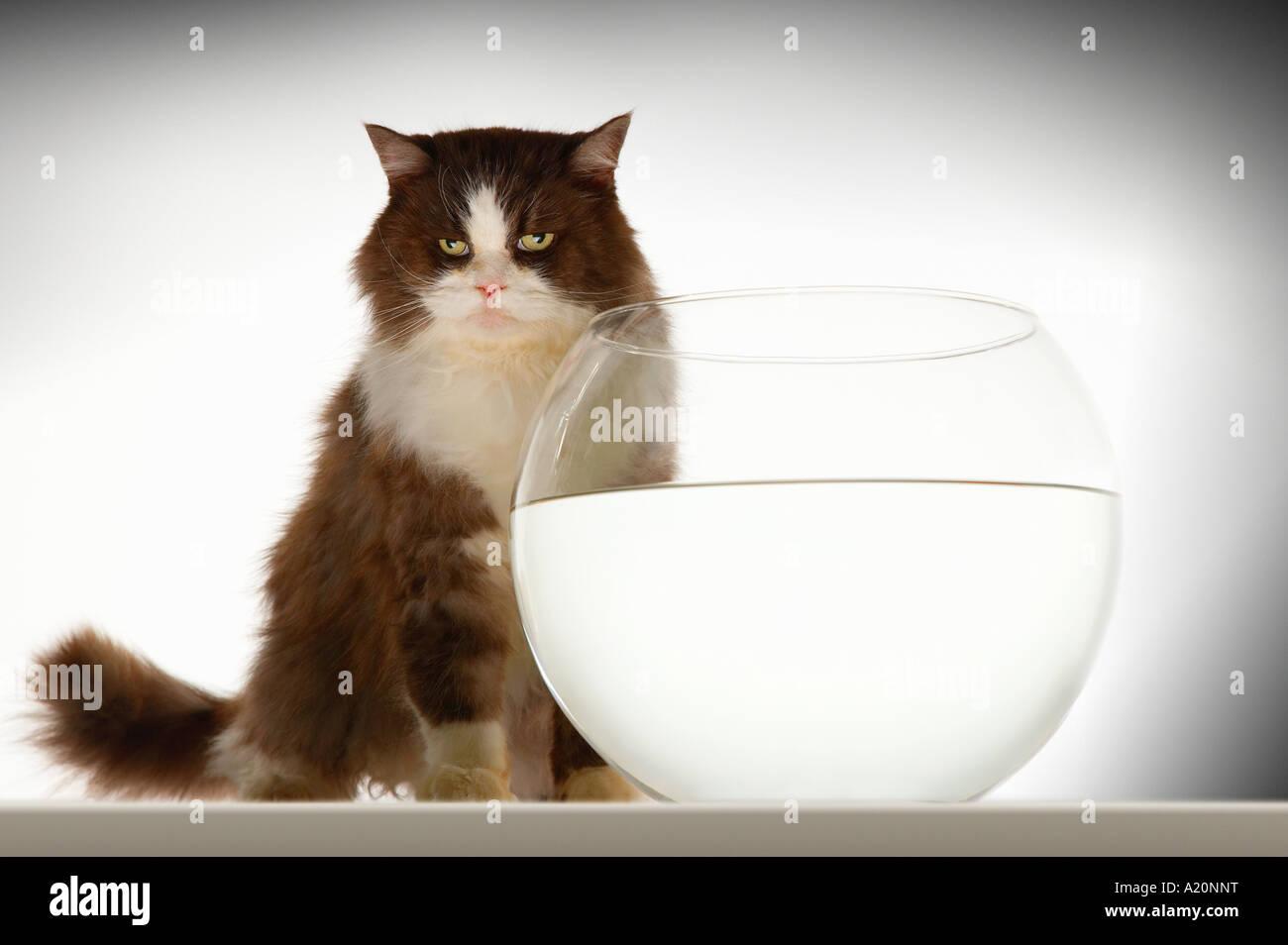 Cat Fishbowl Fish Bowl Imágenes De Stock & Cat Fishbowl Fish Bowl ...