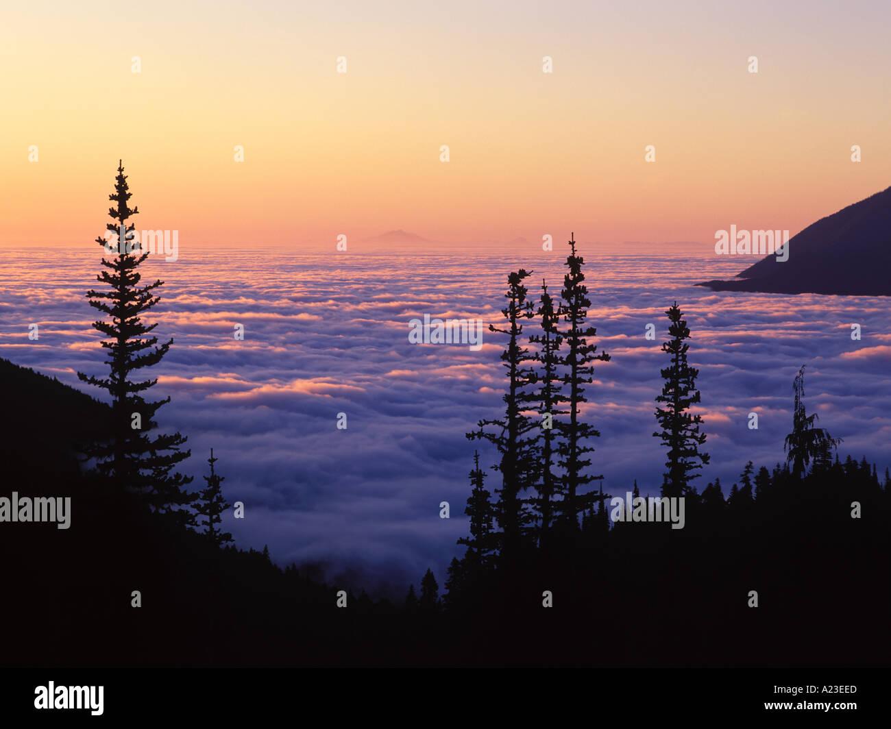 Siluetas de árboles y niebla en la madrugada el huracán Road Olympic National Park Washington EE.UU. Imagen De Stock
