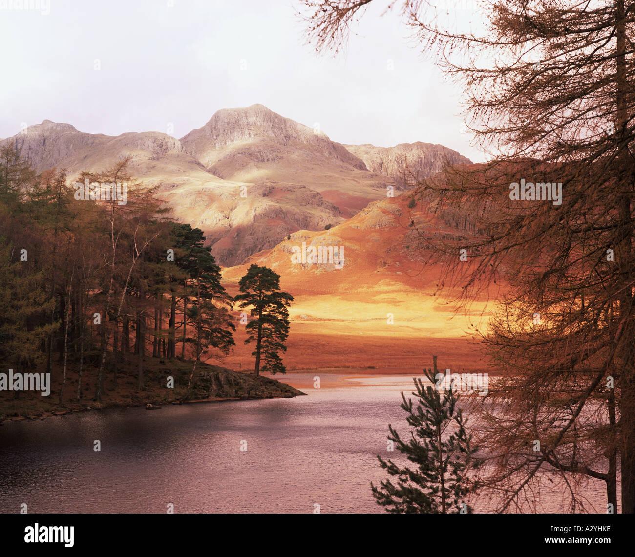 Los árboles por el lago en otoño Foto de stock