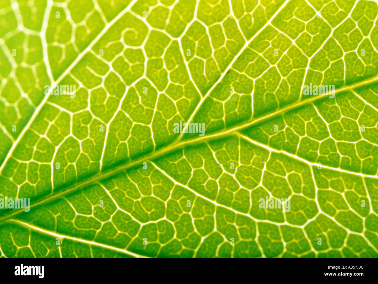 hoja verde Foto de stock