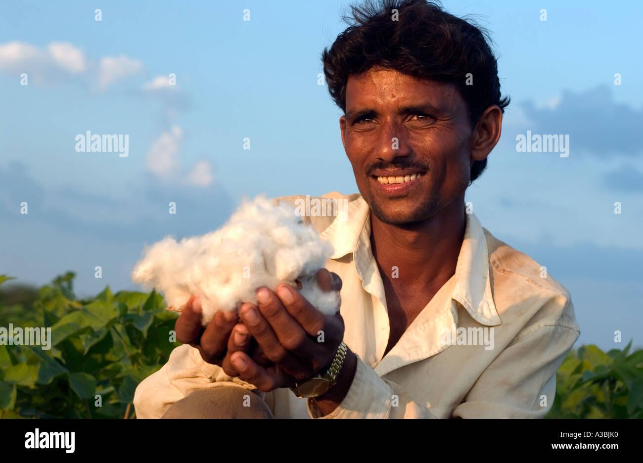 Granjero en Guajarat India cultiva algodón que él vende bajo el esquema de Comercio Justo Fairtrade a Imagen De Stock